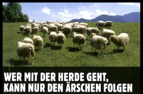 Klicken Sie auf die Grafik für eine größere Ansicht  Name:sheep__sheople__wer_mit_der_herde_geht_3.png Hits:64 Größe:278,3 KB ID:1275