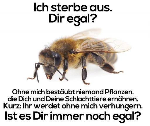 Klicken Sie auf die Grafik für eine größere Ansicht  Name:Biene egal_o.jpg Hits:1 Größe:86,6 KB ID:4567